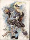 Tropische vogels. Gesigneerd Martin Monnickendam 1917 l.o