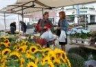 Markt op het Mosveld