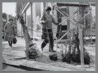 Boomplantdag in de Pijp: plantmateriaal wordt klaargezet voor Wijkcentrum Ceintu…