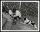 Een dakloze vrouw met hond op de Oosterdokskade
