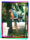 Artis. Een papegaai op zijn stok in Artis