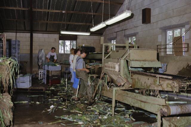Album: werken in Berghem
