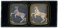 Visualizza Animal stuffed deer Author: Duboscq, Louis Ju… anteprime su