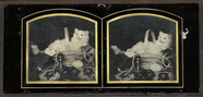 Thumbnail preview of Still life with cat in a basket  Author: Dubo…