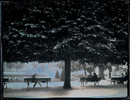 Visualizza People seated on benches under the trees. anteprime su