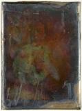 Miniaturansicht Vorschau von loose plate; portrait of Adriaan Justus Ensch…
