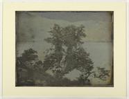 Thumbnail af Arbres au bord d'un étang
