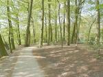 Opname in het Randenbroekerbos. Dit pad loopt vana...
