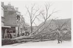 Neergestorte boom op het Prinses Julianaplein. Rec...