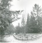 Het Pinetum in bosgebied Birkhoven....