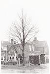 Nieuwe boom op de plaats van de oude Wilhelminaboo...