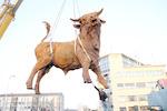 """""""Onze Stier"""" hangt boven de rotonde Flierbeeksinge..."""