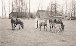 Paarden bij boerderij Het Gagelgat, Birkstraat 107...
