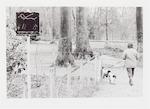 Wandelaar met honden in Park Randenbroek. Links op...