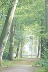 Laan in landgoed Den Treek/Henschoten, uitziende o...