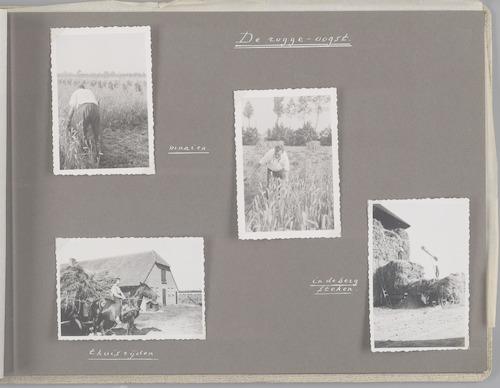 """Bladzijde uit het fotoalbum """"Beoosten de Eem"""", dat gewijd is aan de ruilverkaveling in dat gebied. Beelden van de rogge-oogst: maaien, thuisrijden en in de berg steken."""