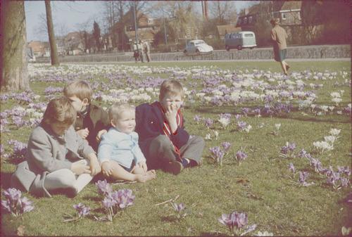 Vier kinderen te midden van bloeiende krokussen in...