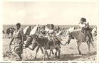 De Panne: ezeltjes op het strand