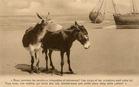 De Panne: sprekende ezels op het strand, een oproep tot rechtvaardiger behandeling