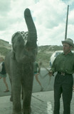 Oostduinkerke: olifanten in de duinen