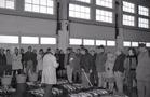 Nieuwpoort: visverkoop in vismijn