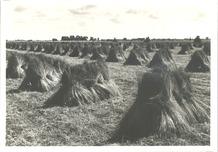 Wulpen: vlas rooien en drogen