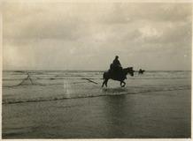 De Panne: paardenvisser rijdt het strand op
