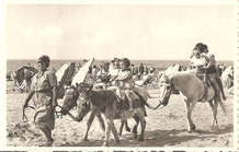 Koksijde: ezeltjes op het strand