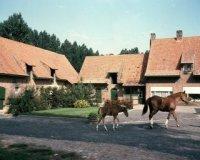 Elverdinge: landbouwleven in 1972