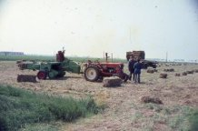 Adinkerke: de oogst