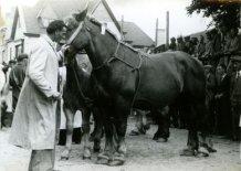 Poperinge: merrie van Georges Joye wint paardenprijskamp 1951