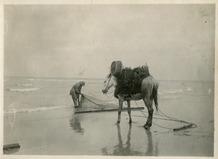 De Panne: garnalenvisser te paard bindt zijn net terug dicht.