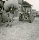 Reninge: hoppeoogst op hoeve Boeraeve