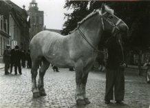 Poperinge: ruin van Dassonville winnaar paardenprijskamp van 1951