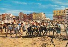 De Panne: Maria Miette en haar ezeltjes