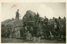 Vladslo: binnenhalen van de oogst