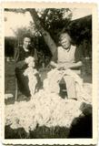 Lo: wol plukken op de hoeve Ameloot