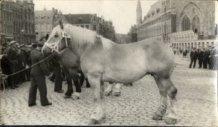 Ieper: provinciale paardenkeuring op de Grote Markt
