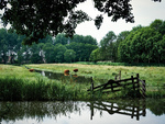 Heempark Madestein met Schotse Hooglanders; vervaardiger: Gispen, Piet; 19 -6 -2…