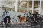 Spui, fietsenstalling van Biesieklette tussen de nrs. 70 (stadhuis, links) en 68…