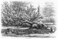 Gezicht naar Koekamp na de storm van 28 mei 1860.