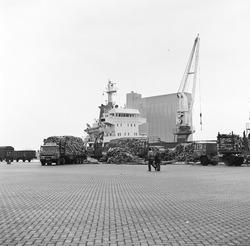 Overslag hout in de Zevenaarhaven, maart 1978.