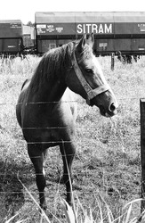 Paard op een weiland met op de achtergrond een trein in het...