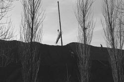 Het overdekken van de hopen met kolen van Ovet aan de Massagoedhaven...