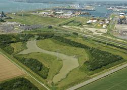 Sloebos aan de rand van het havengebied Vlissingen-Oost.