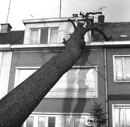 omgewaaide boom tegen huis