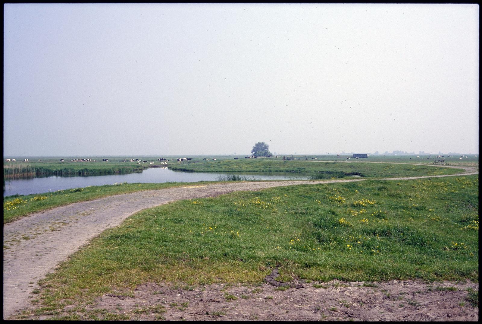 De Zomerdijk in de polder
