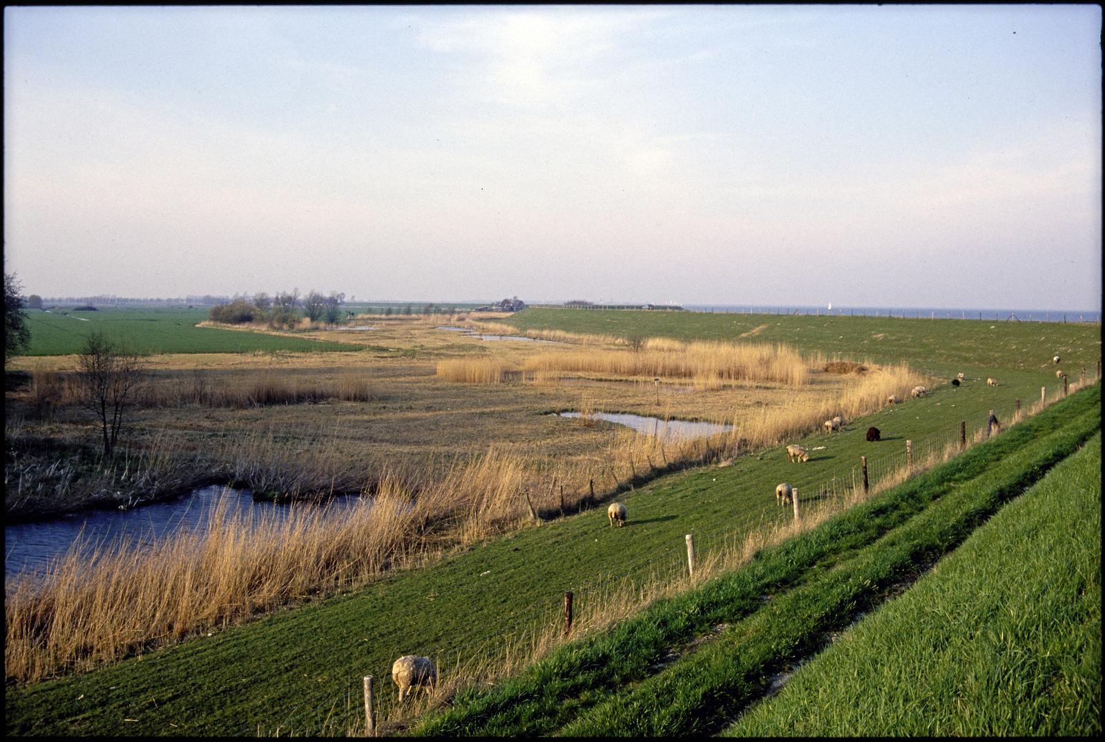 Weidelandschap aan de Westfriese omringdijk