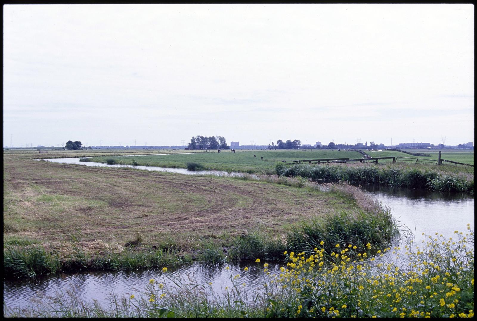 De Burkmeerpolder bij Broek in Waterland