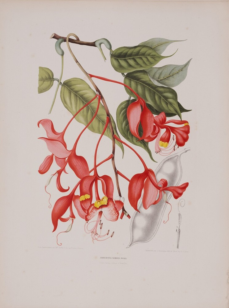 Fleurs, fruits et feuillages choisis de la ftore et de la pomone de I' ile de Java, peints d' apres nature